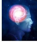 Brain and Brawn